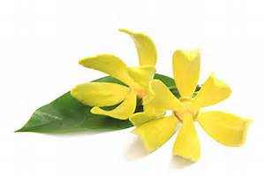 fleur-dylang